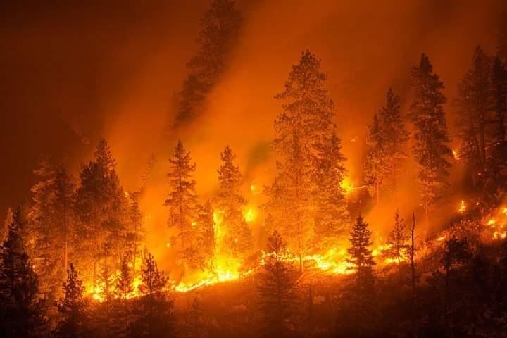 Incendi in Calabria